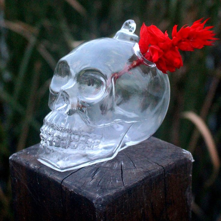 Cheap hanging glass vase, Buy Quality glass vase directly from China hanging glass Suppliers: 1Pc Hot Originality Hydroponic Plants Garden Flower Pot Skull Shape Hanging Glass Vases Other Yard Outdoor