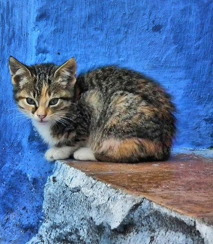 sweet little thing - CHAOUEN, MOROCCO