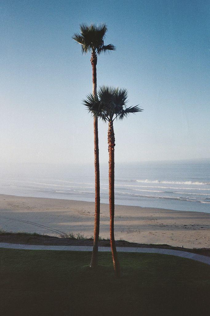 palmtrees: Style, Palmtrees, California, Inspiration 127, Palm Trees, Beach, Random Inspiration, Palms, Photography