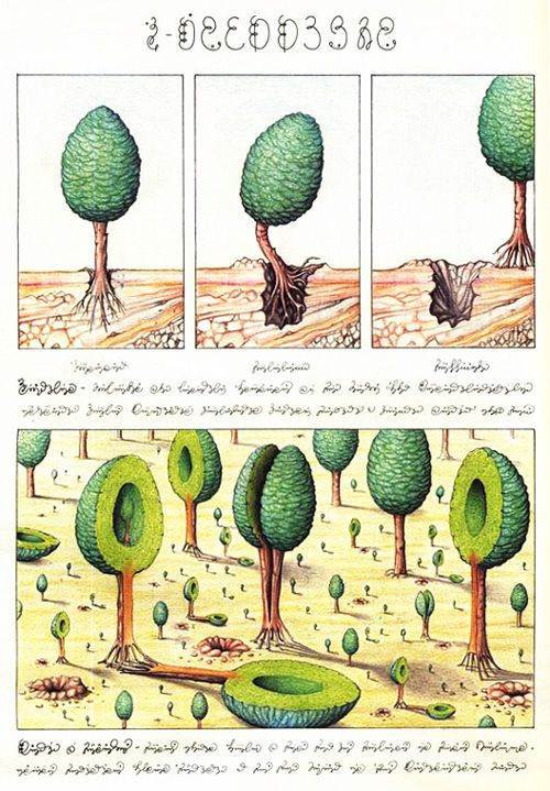Codex Seraphinianus: History's Most Bizarre and Beautiful Encyclopedia