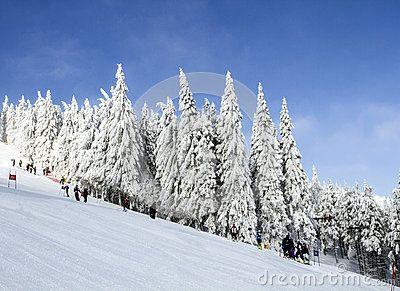 Frosty sunny winter day, snow-covered fir, mountain slope, the Jizera Mountains.Czech Republic