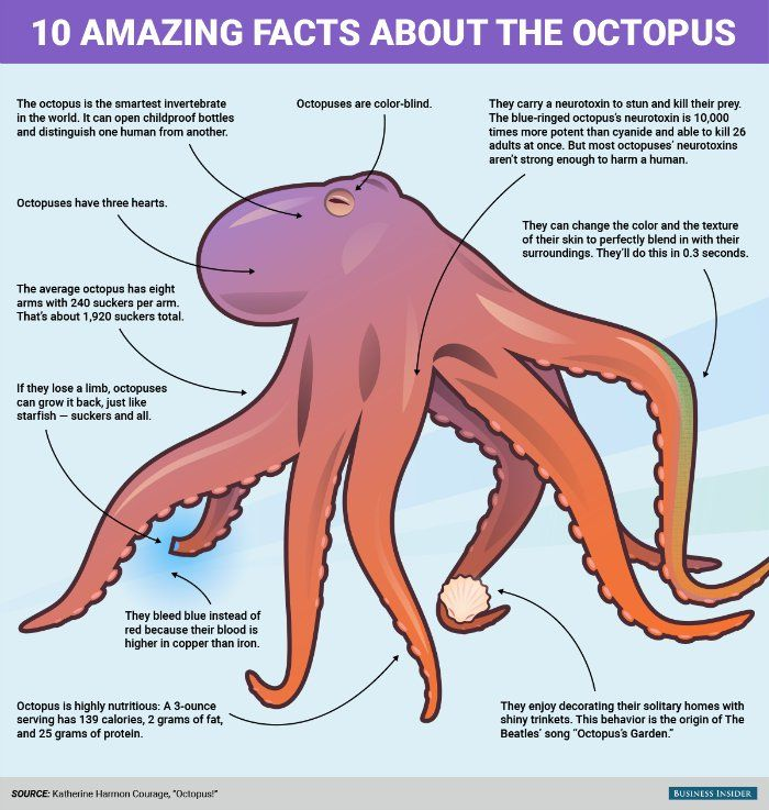 This infographic shows all the reasons the octopus is the coolest animal ever