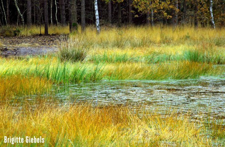 Autumn in Brabant, TheNetherlands - Brigitte Giebels