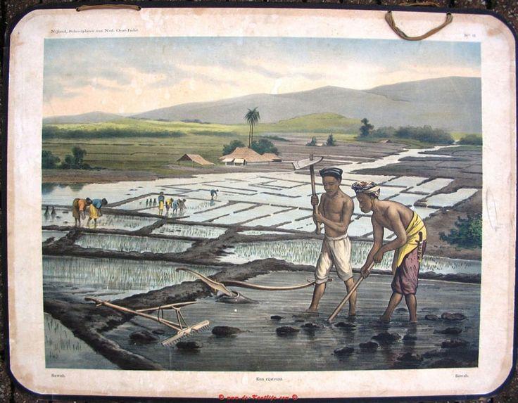 rijstveld, oude schoolplaten, indie, bali, indonesia