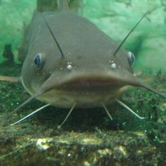 Catfish Fishing Tips