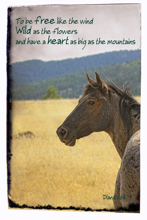 To be free like the wind, Wild as the flowers and have a heart as big as the mountians. Is this your horses wish for you? Poster Photo: Diana Volk