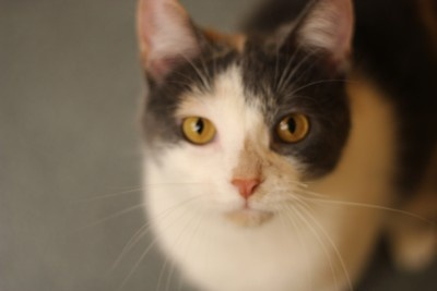 Cita is lookin' for some love! Check her out at hatsweb.org!