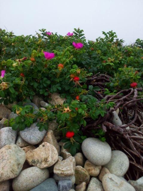 Joe, Diane, & Mallery's Big Adventure - Modern Day Gypsies: Acadia National Park on Schoodic Peninsula