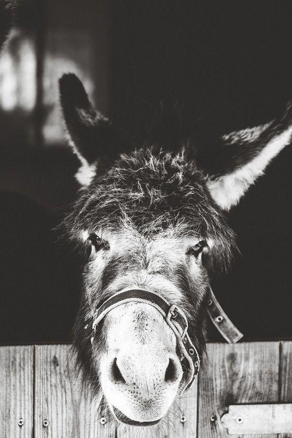 Donkey Photography,Donkey Wall Decor,Donkey Print,Black and White Donkey Photography,Donkey Print,Animal Photography,Nature Photoraphy