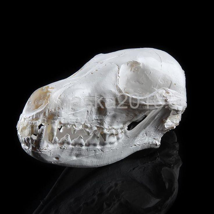 Resin Realistic Art Replica Animal Fox Skull Model Medical Party Prop Decor