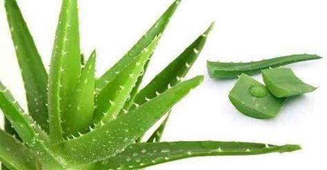 Aloe vera jel ve limon suyu muazzam güzellik için faydaları vardır. Her ikisi de yüzünüzde karanlık noktalar ve lekeleri azaltır, ve hatta çatlakları en aza indirmeye yardımcı yardımcı olur. Onlar da akne ve akne izleri iyileşmesine yardımcı olur. Saçında kullanıldığında, bunlar, kepek olmasını önler, aşırı yağlanmasını önler ve saç büyümesini hızlandırır ve saç dökülmesini önler ve saçı …
