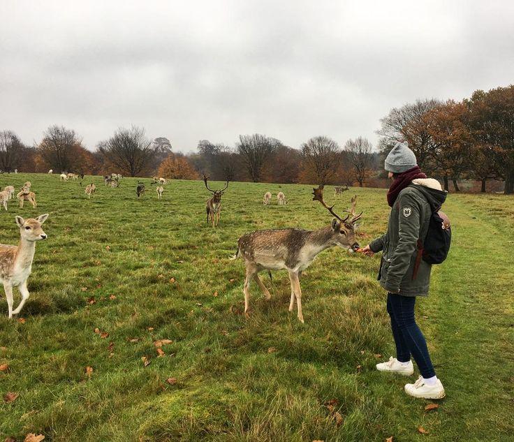 Sevenoaks   ____________    #sevenoaks #cervols #park #golf #enelcampo #talcual #england