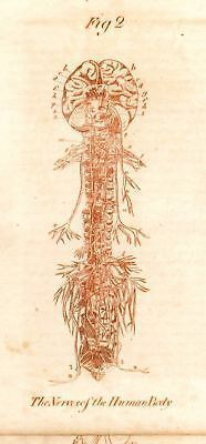 1756 Sepia Colored from Culpeper's Physician (NERVES)