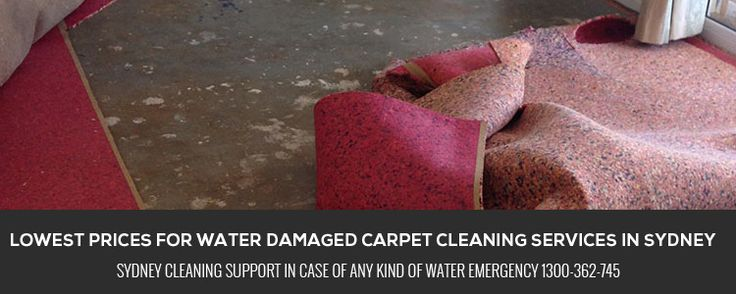 It is recommended that for home cleaning always take assistance of professional. There are many benefits of taking expert assistance for cleaning responsibilities. You will get the reliable and complete cleaning solutions for a healthier environment.   http://sydneycleaningsupport.com.au/carpet-cleaning-sydney