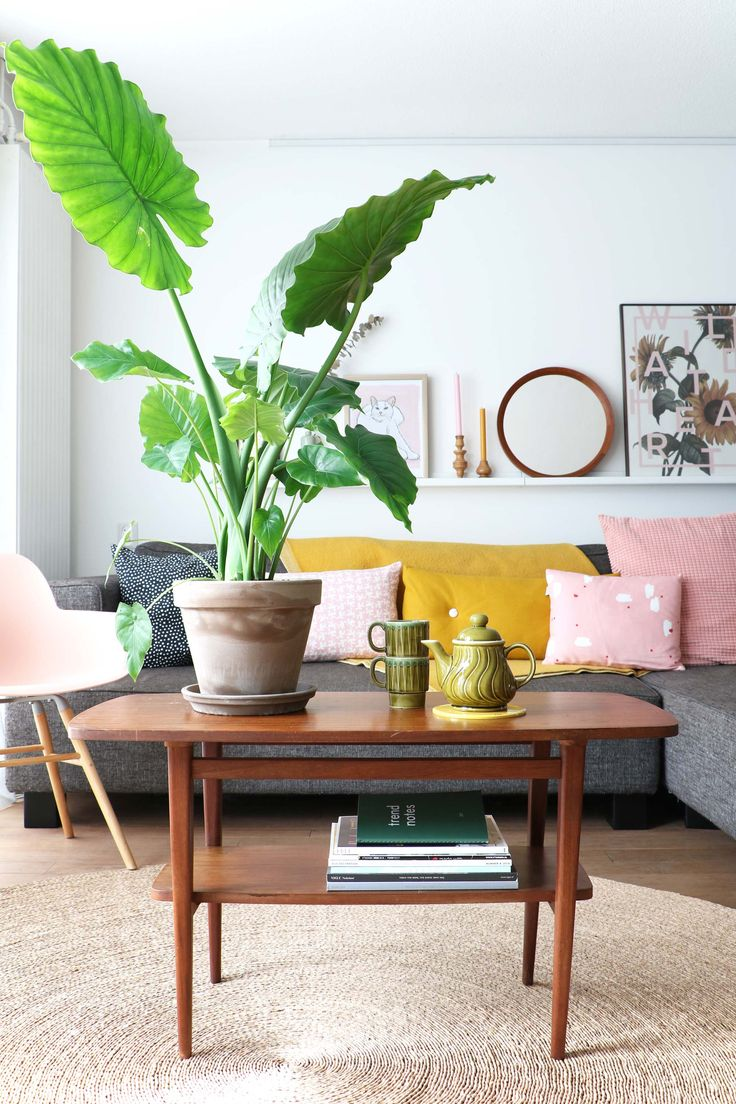 big Alocasia with big green leaves in terracotta pot in pastel colored home with vintage furniture in home of blogger and stylist Marij Hessel from @myattic