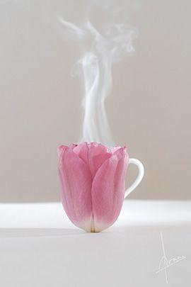 <3: Pink Flowers, Teas Time, Teas Cups, Coffee, Tea Parties, Tulip Teas, Teacups, Pink Tulips, Teas Parties