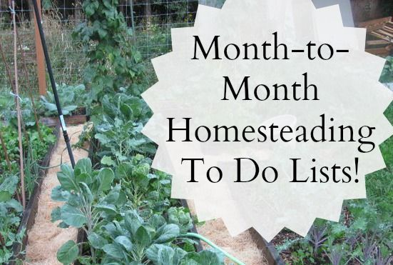 Month-to-Month Gardening/Homesteading To Do Lists!