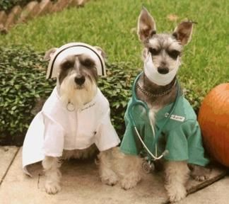 Cats And Dogs Scrubs