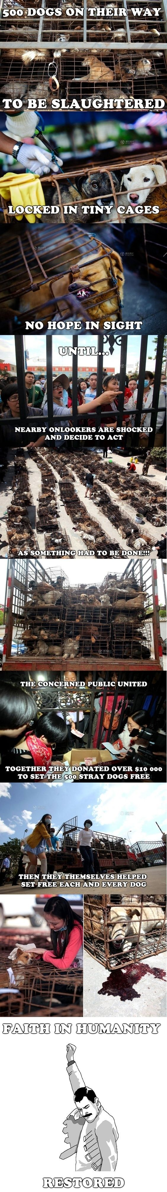 Faith in humanity restored! But then what happened? They need a home...: Animal Rights, Animal Cruelty, Animal Abuse, Faith In Humanity Restored, Faith Restored, Faith In Humanity Dogs, Animalabuse, So Sad