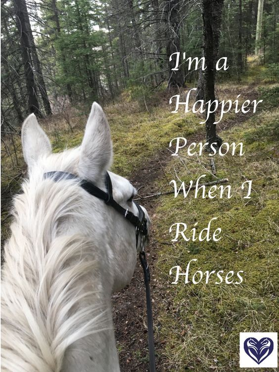 27 Horse Quotes
