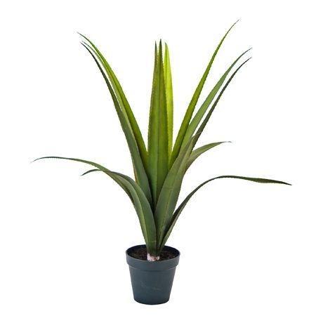 1000 id es sur le th me plantes toxiques sur pinterest. Black Bedroom Furniture Sets. Home Design Ideas