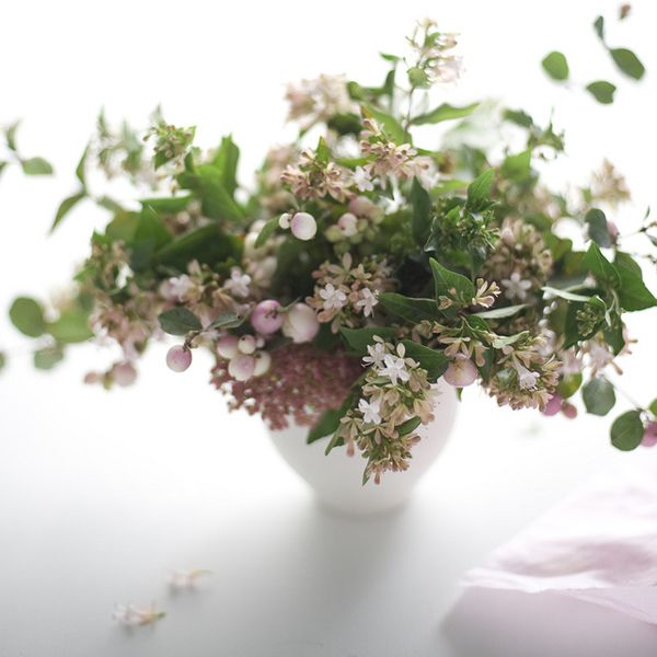 Delicate pink flowers and green foliage