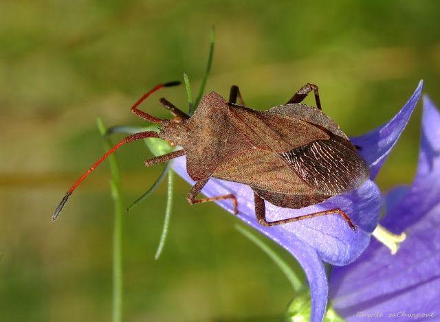 Chwile Zachwycone Wtyki Straszyk I Lakowy Animals Insects Moth