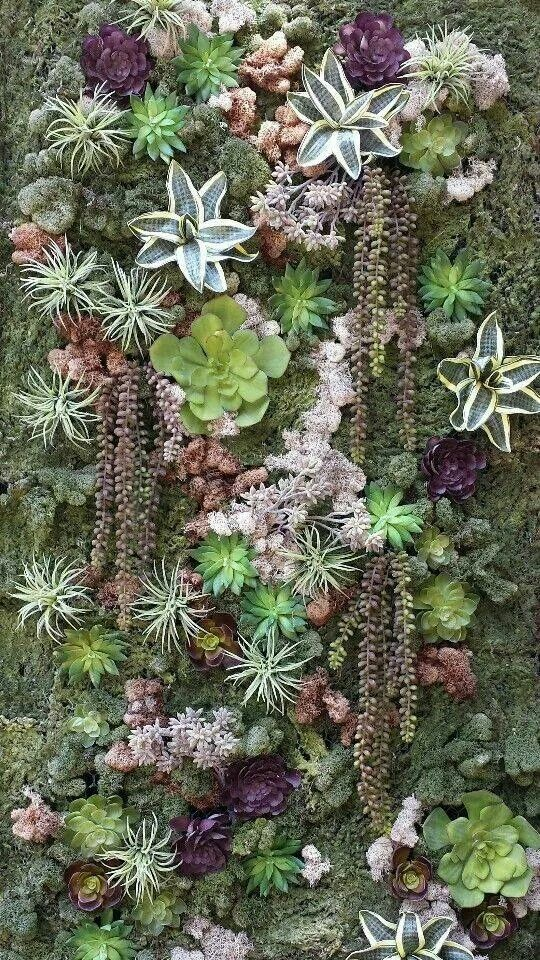 Succulent wall. Look at all the different types. Beautiful shades and textures…