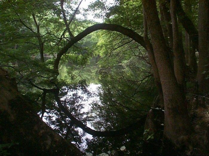 South Carolina hikes.  http://www.onlyinyourstate.com/south-carolina/14-epic-hiking-spots-in-sc/