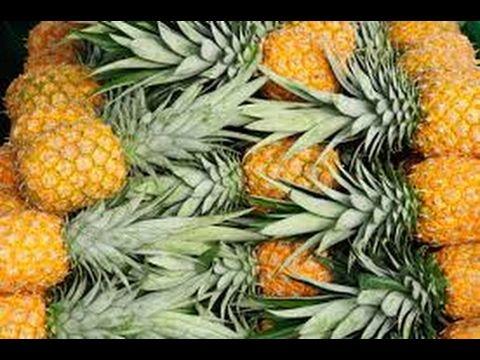 Cómo Cultivar Piña Gold - TvAgro por Juan Gonzalo Angel