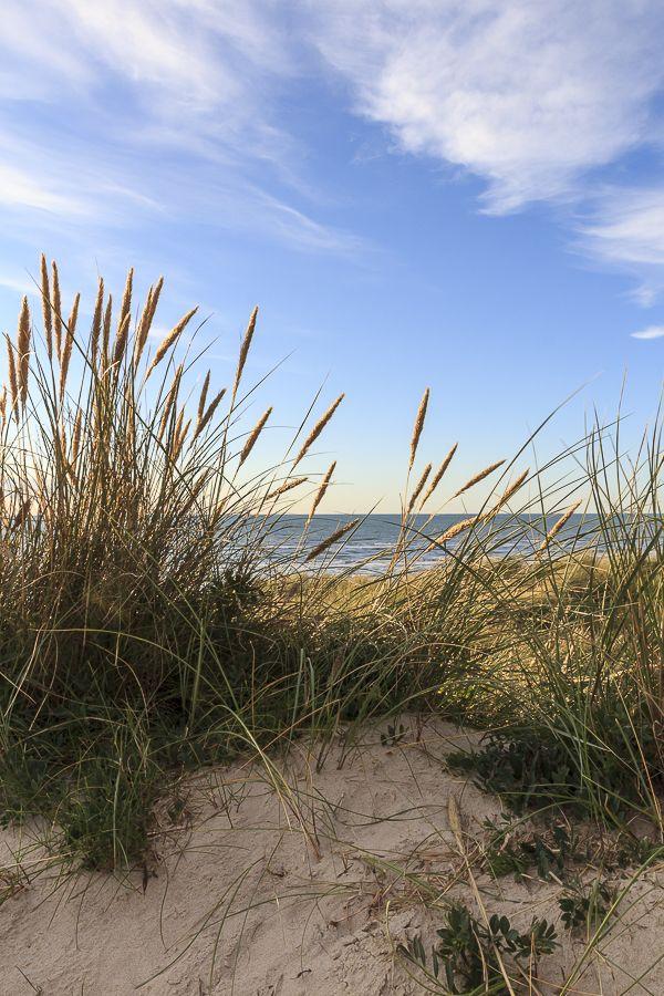 Amalie loves Denmark Ein Tag am Strand an der Nordseeküste Jammerbucht in…
