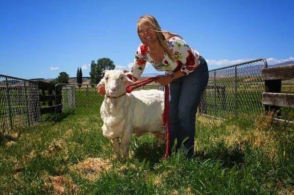 shrek-the-sheep-79-600x399
