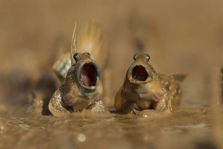 Funny animals photo with Comedy Wildlife Photography Awards 2017