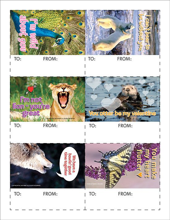 31 best images about Valentines Day – Animal Valentine Cards