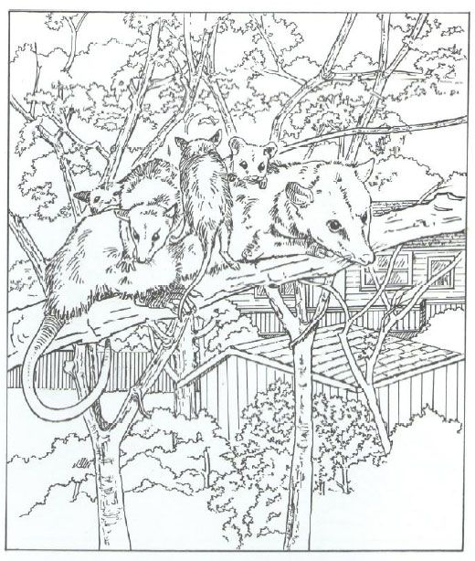 Coloring Pages For Quilt Blocks : 483 best coloring pages: adult images on pinterest