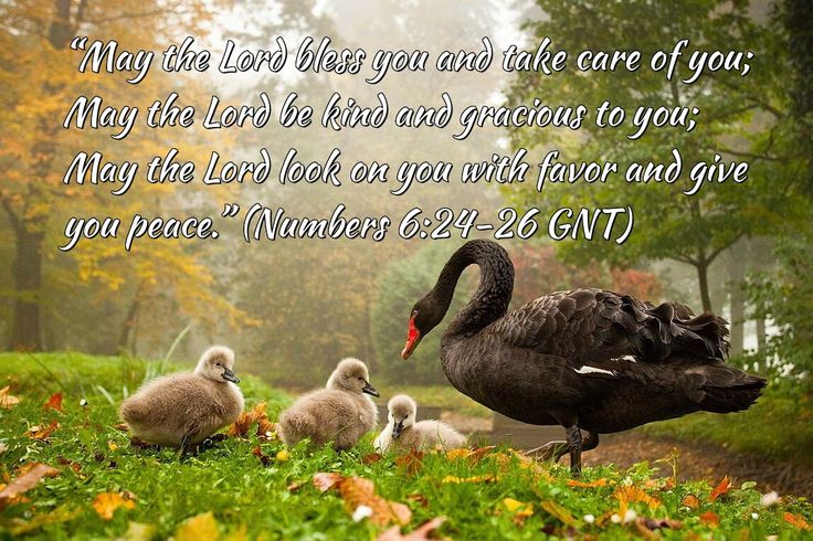 """""""He will cover you with His wings; you will be safe in His care; His faithfulness will protect & defend you."""" (Psalm 91:4 GNT)"""