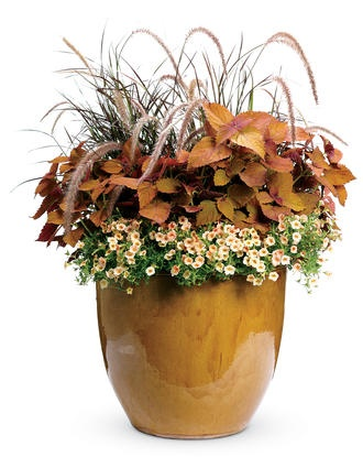 Container gardening recipe for full sun ☼ Chestnut Hill from Proven Winners: 2  Superbells® Peach (Calibrachoa) +2 ColorBlaze® 'Sedona' (Coleus Solenostemon scutellarioides) +1 Graceful Grasses® Purple Fountain Grass (Pennisetum setaceum 'Rubrum').