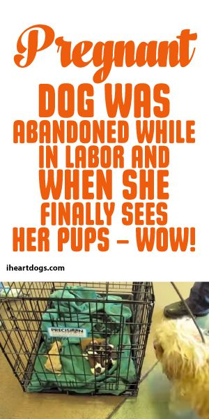 Pregnant Dog Was Abandoned While In Labor And When She FINALLY Sees Her Pups - Wow! <3