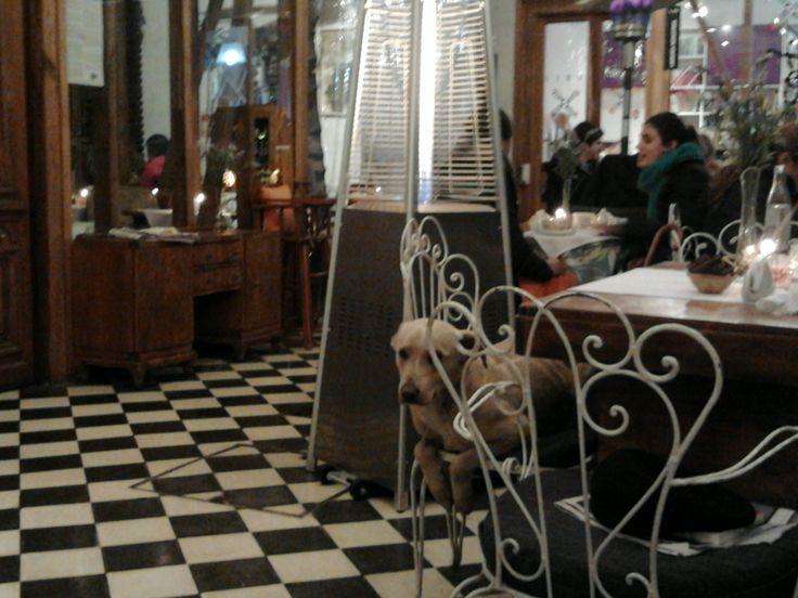 Perrito barzúo, calientito y feliz en Café La Candelaria (Barrio Italia).