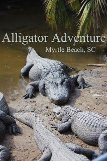 Myrtle Beach Vacation 2013: Alligator Adventure Review