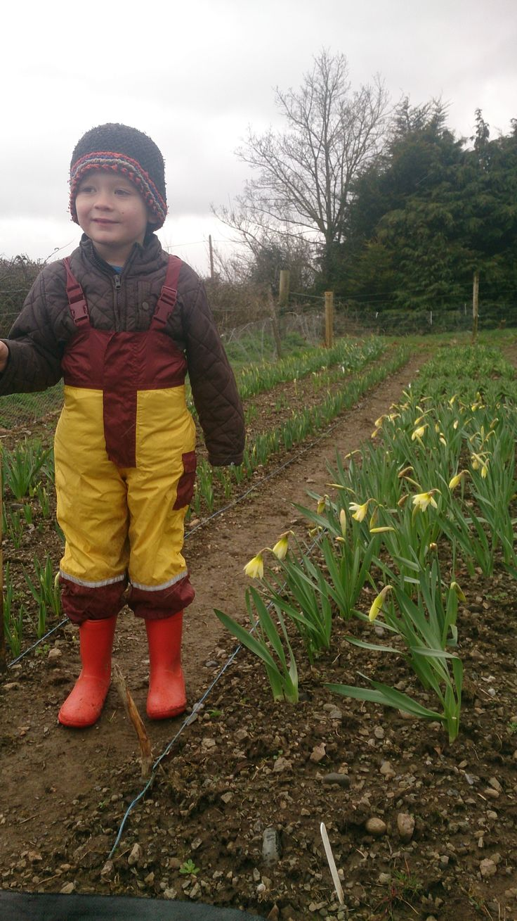 Harry checking out the daffodils