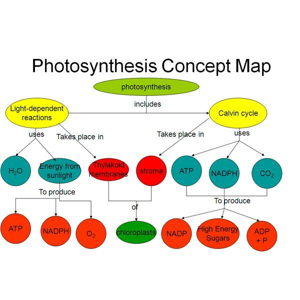 "concept map on photosynthesis A concept map-centered learning environment  an energy transformation cmap that could be accessed by linking it to the ""energy"" concept in the concept map in figure 11, and a photosynthesis cmap that may be linked to it (click on the image to display a larger image."