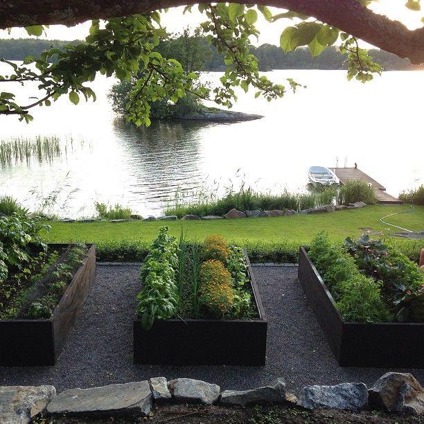 Inte för att skryta..men detta är Mina KöksväxtlådorHär växer ekologisk ruccola,moröt... | Use Instagram online! Websta is the Best Instagram Web Viewer!