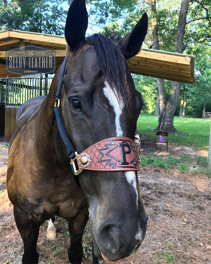 CUSTOM leather bronc halters! | Selby Leather Co