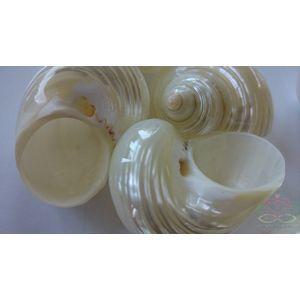 http://www.goedkoop-bloemschikken.nl/12747-thickbox/turbo-silvermouth-5cm-pearl-pearlized-6-stuks.jpg