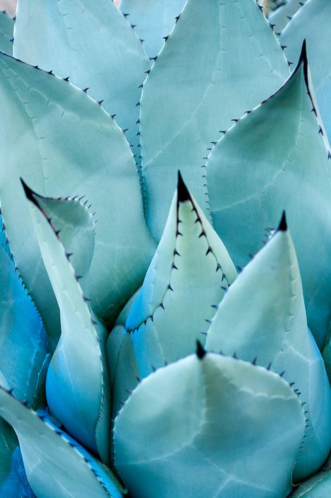 I'd love to use some agave in your yard!