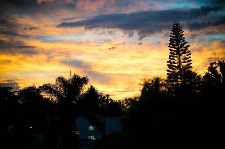 Untitled.  Location: Silverlake Los Angeles : Sony A7II / Sony 85mm f/1.4 GM  #silhouette #sunset #silverlake #losangeles #la #california #ca #usa #mirrorless #sony #agameoftones #sonyimages #sonyalphasclub #sonyalpha #alpha #a7 #a7II #nikcollection