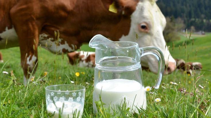 Znáte tajemství domácího jogurtu či podmáslí? Základním předpokladem je čerstvé mléko