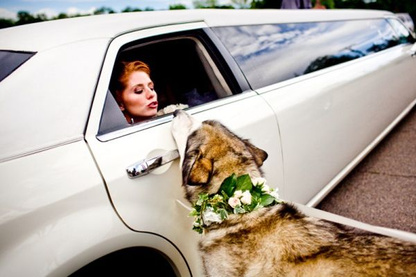 woof, you hired a dog walker, right?: Wedding Photography, Dogs, Wedding Ideas, Weddings, Brides, Dream Wedding, Puppy