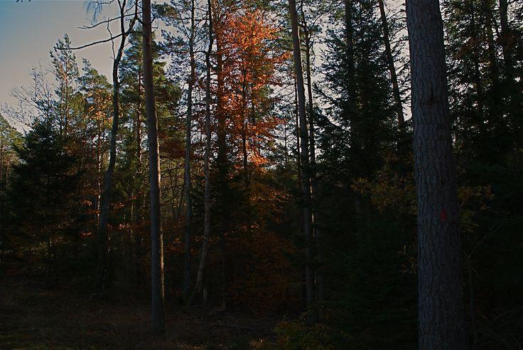 Höstfärger på träden.
